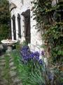 Les Iris en fleurs au gite le cairn